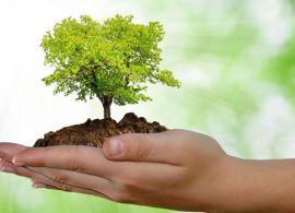 DESPOLUIR - A falta que a educação ambiental nos faz